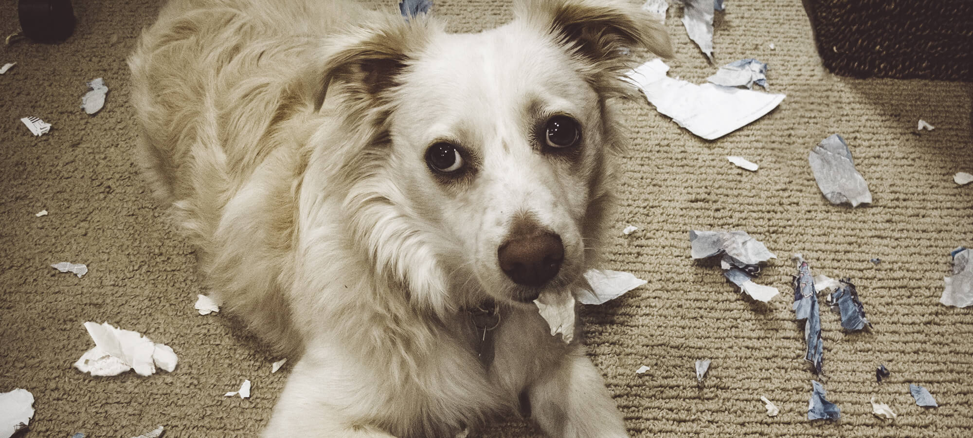 The dog ate your mail?